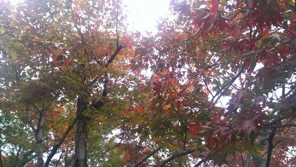 Herfstkleuren in Kyoto