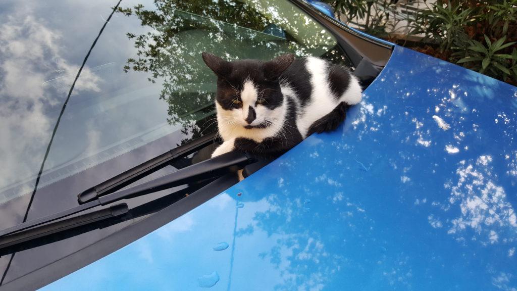 Katten zie je ook overal - deze had een bijzonder plekje uitgezocht