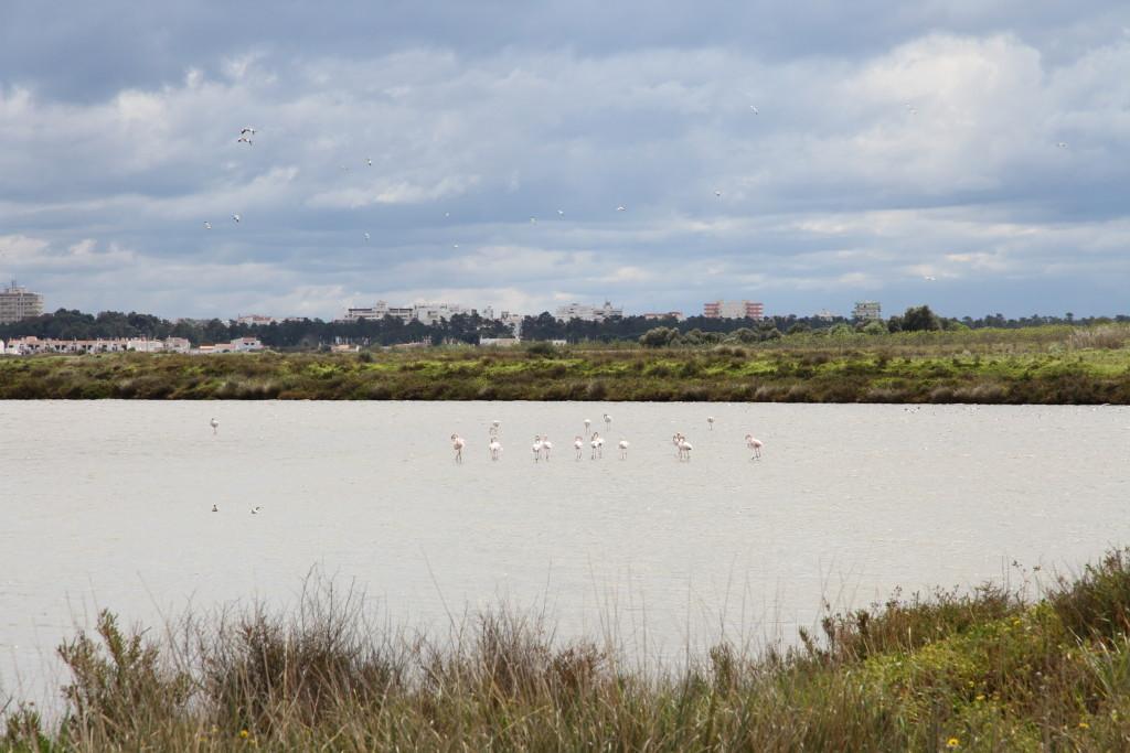 Onderweg: flamingo's spotten!